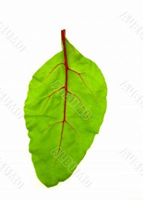 Baby beet leaf