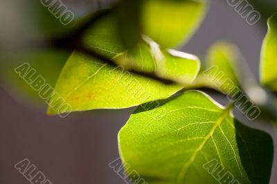 close-up of a green leaf with sun shine