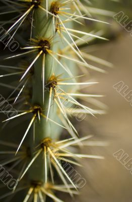 Watch the cactus thorns
