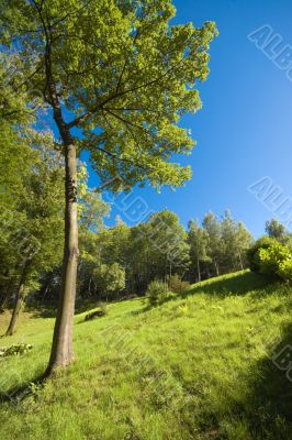 summer woodland wide angle view in sunny day