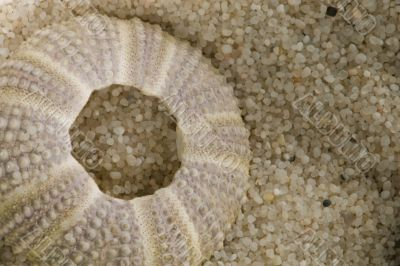 sea urchin shell in beach sand