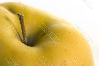 Yellow apple stem macro