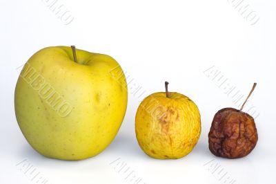Apple life cycle evolution