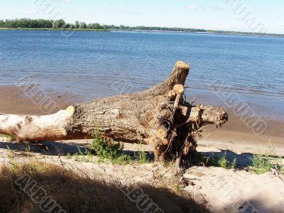 Rampike, Volga river bank