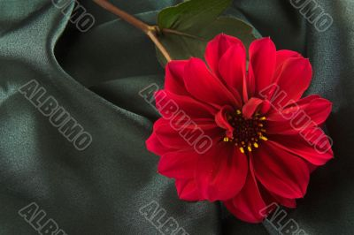 Red flower on satin