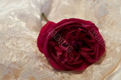 redrose on satin and lace