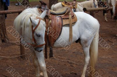 White Horse and Saddle