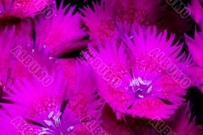 Exotic Flower Detail