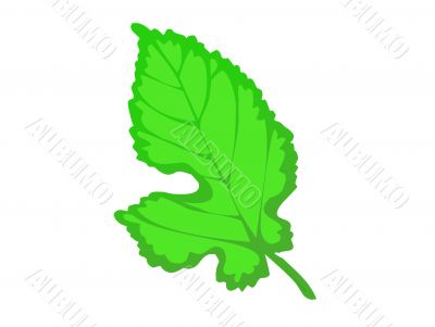 Green leaf illustration, summer,isolated