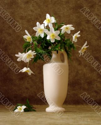 white flowers in vase over brown background