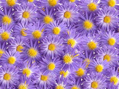 violet flowers for decoration over background