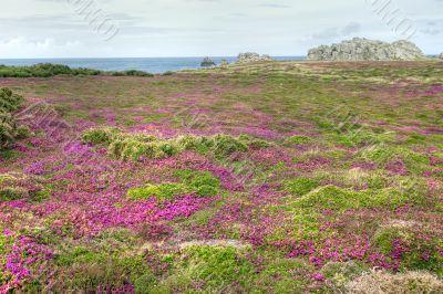 coastline heath