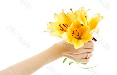 female hand holding yellow madonna lily bouquet
