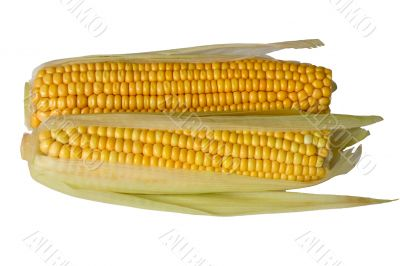 Two corn ears on white background, isolated