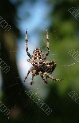 Spider hunting
