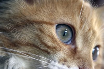 Closeup of a cats eyes