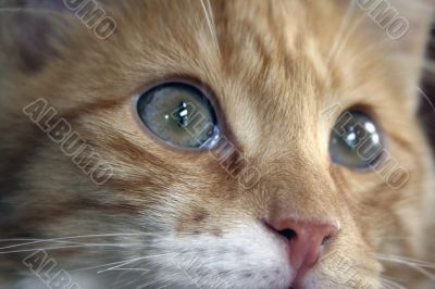 Close up of a cats eyes