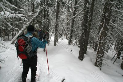 Blue shirt, snowshoe hikers in woods