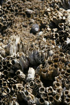 Abstract, barnacles at low tide