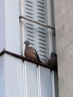 Doves On Balcony