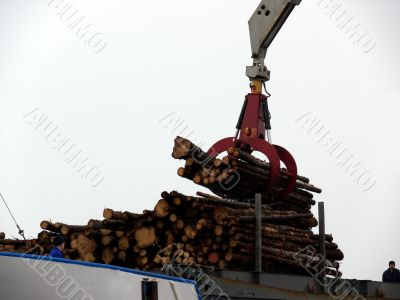 Timber Boat Loading