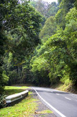 Tropical Rainforest Road