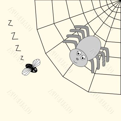 spider and fly cartoon