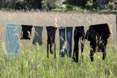 Dry laundry