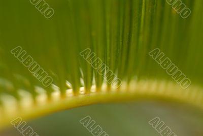 Green natural pattern.