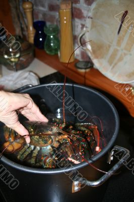 Putting lobsters into the pot