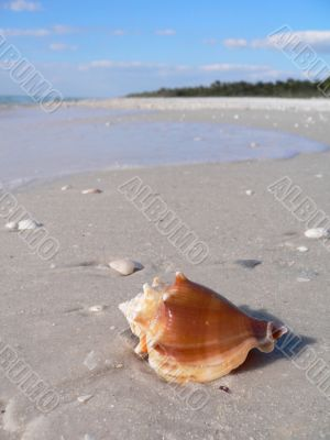Beautiful sandy beach and shell