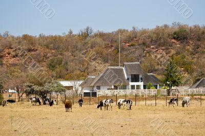 Farm agriculture