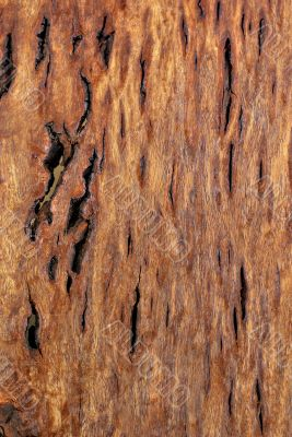 Wood Texture: Figured Tasmanian Blackwood
