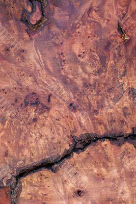 Wood Texture: Myrtle Burl