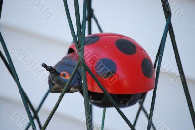 trapped ladybug