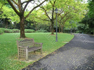 Lone bench in park