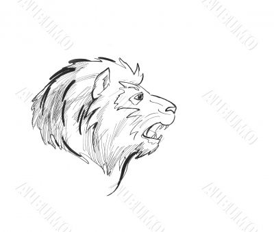 Lion head sketch