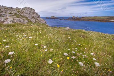 wild flowery coastline hdr