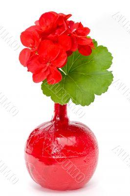 geranium in blood