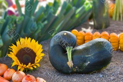 Nice vegetable marrow