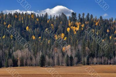 Small cloud above an autumn grove.