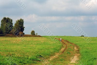 road through a meadow