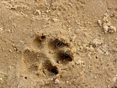 Trace on sand