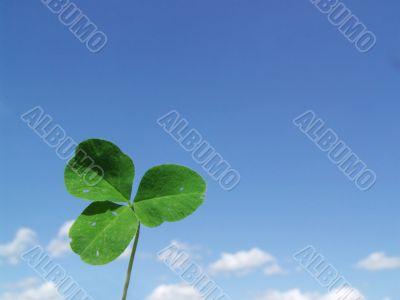 Leaf of clover on  blue sky