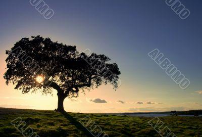 Oak tree by a lake
