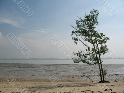 Lone Tree at the Beach