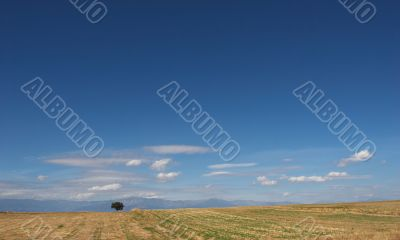 desert landscape with lone tree