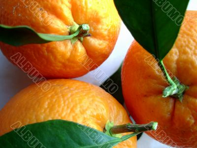 photo of a navel oranges