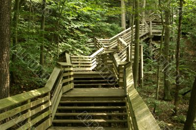 Woodland stairs