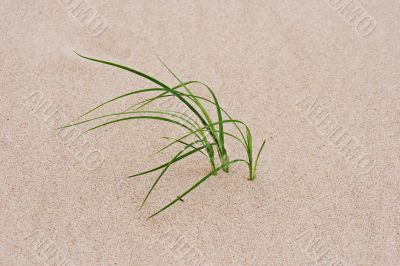 grass through sand